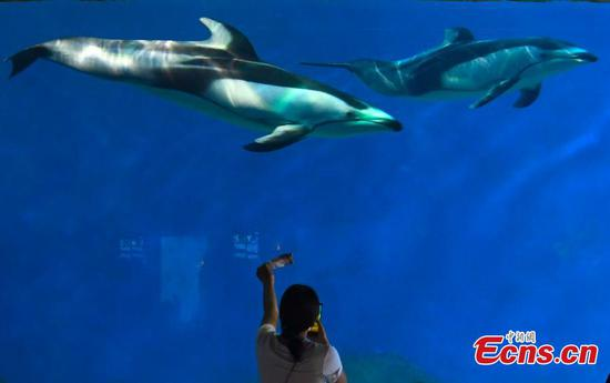 Pacific white-sided dolphins make debut in Chongqing park