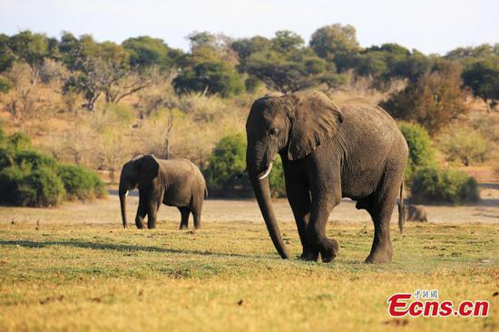 Chobe National Park, home to wide range of wildlife